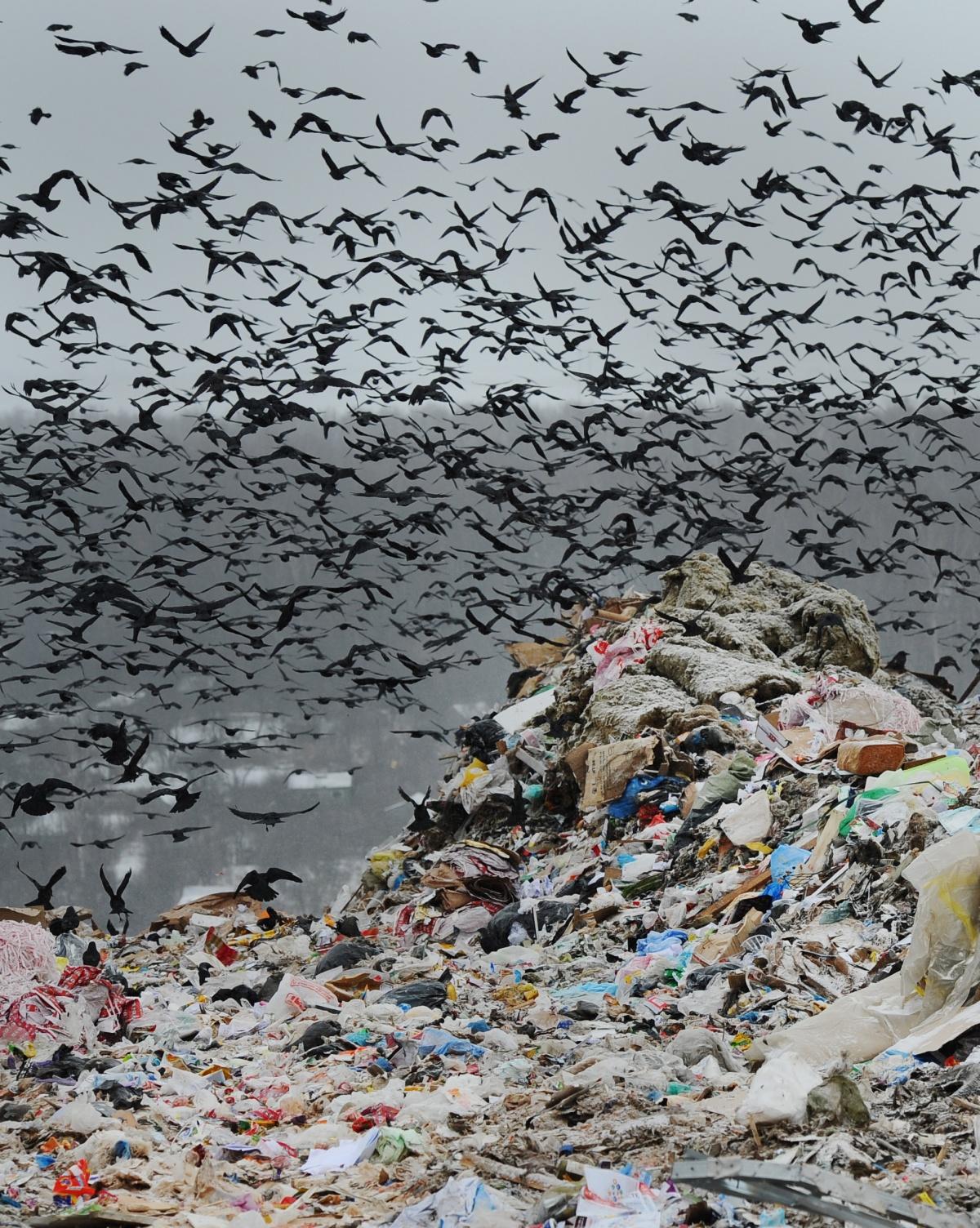 В коммунальных платежках появится графа о вывозе мусора