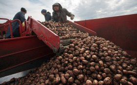 Аграрный бум, о котором твердили Медведев и Путин, оказался… «ошибкой»