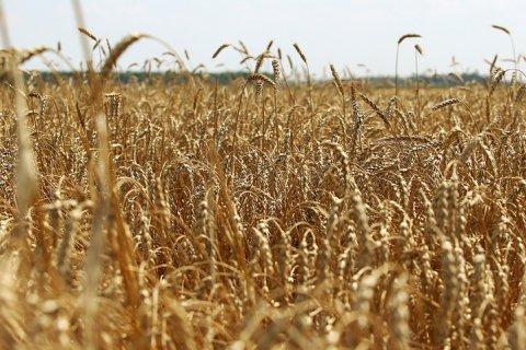 Кому достанется прибыль от зернового экспорта? – эксперты «Красной линии»