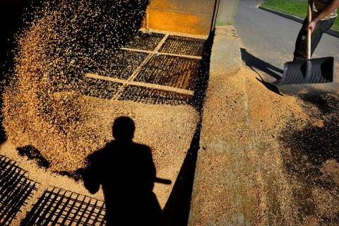 В России будет собран рекордный урожай. Но есть проблема