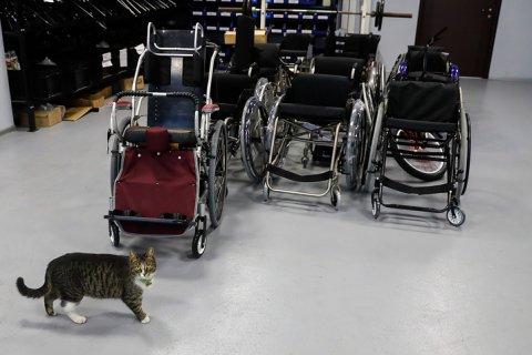 Счетная палата: 170 млрд рублей, выделенных на госпрограмму «Доступная среда», не улучшили жизнь инвалидов