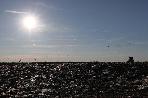 Губернатор Подмосковья отправил «девочку в розовом в Голландию… смотреть на мусор