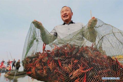 В Китае начался сезон раков