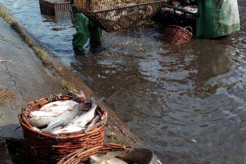 Чиновникам грозит увольнение за провал в рыбной отрасли
