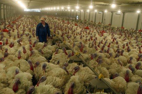 В Подмосковье зафиксирована вспышка птичьего гриппа