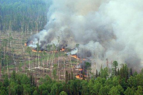 Площадь лесных пожаров в России выросла на 80%